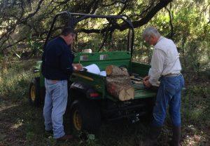 Ed and Chris measuring live oak