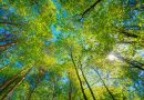 TREE Fund awards nearly a quarter million dollars for tree research and education projects