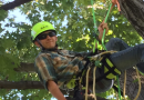 Crowning Achievements: Back to Forestry School